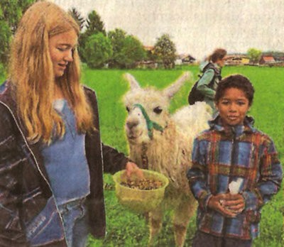 Lamas und Mais