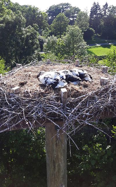 Foto mit allen drei Storchenbabies