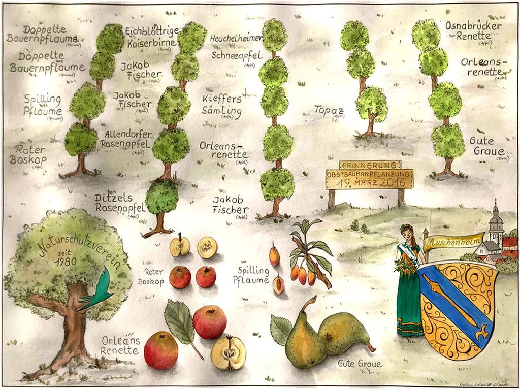 Unsere Obstsorten auf unseren Streuobstwiesen